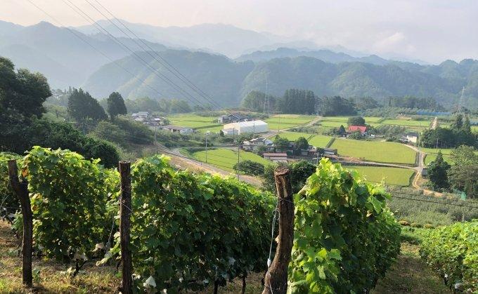 20210206ワイン長野2.jpeg